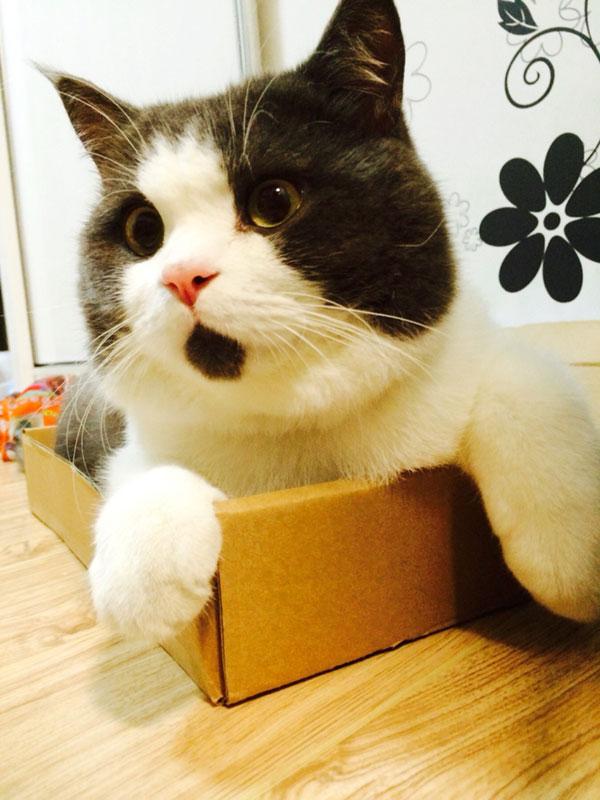 chin fur makes cat look surprised banye china (2)