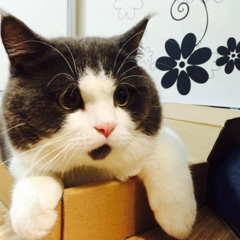 chin fur makes cat look surprised banye china (3)