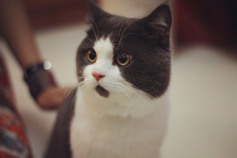 chin fur makes cat look surprised banye china (6)