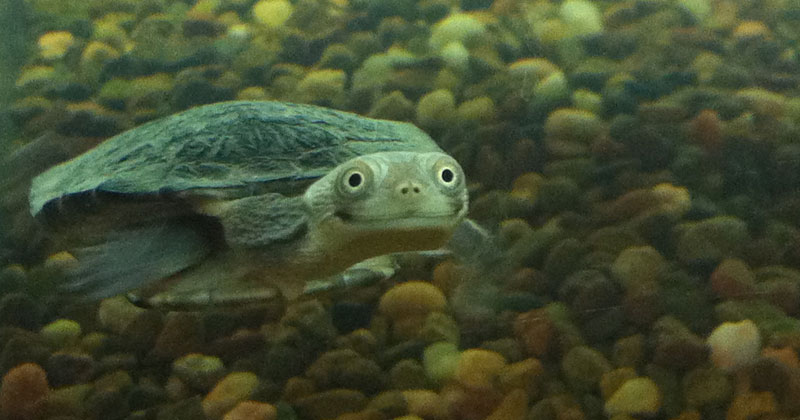 happy smiling turtle The Shirk Report   Volume 289