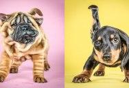 Portraits of Puppies Mid-Shake