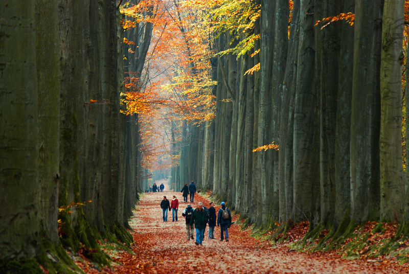 Picture of the Day: Walking Amongst Giants