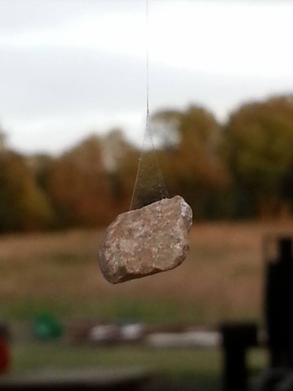 spider using rock to anchor web (3)