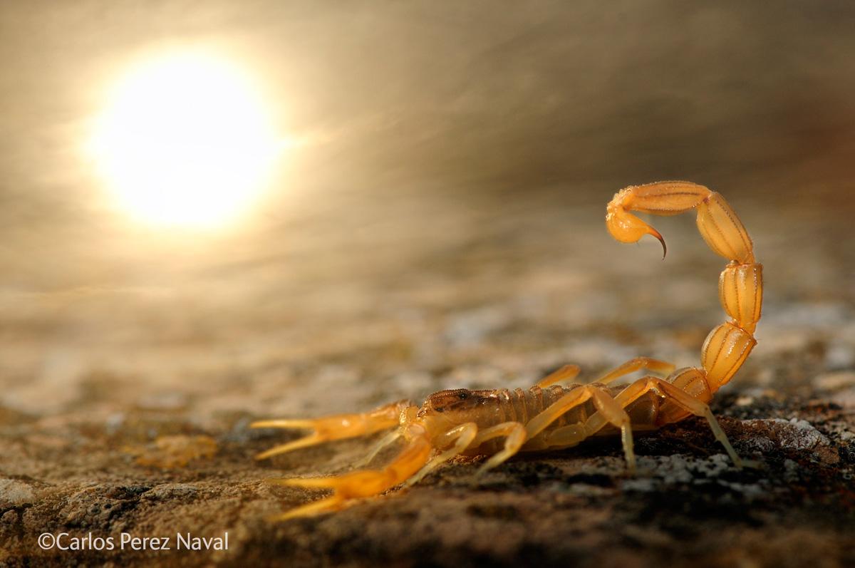 wildlife photographer of the year 2014 winners (1)