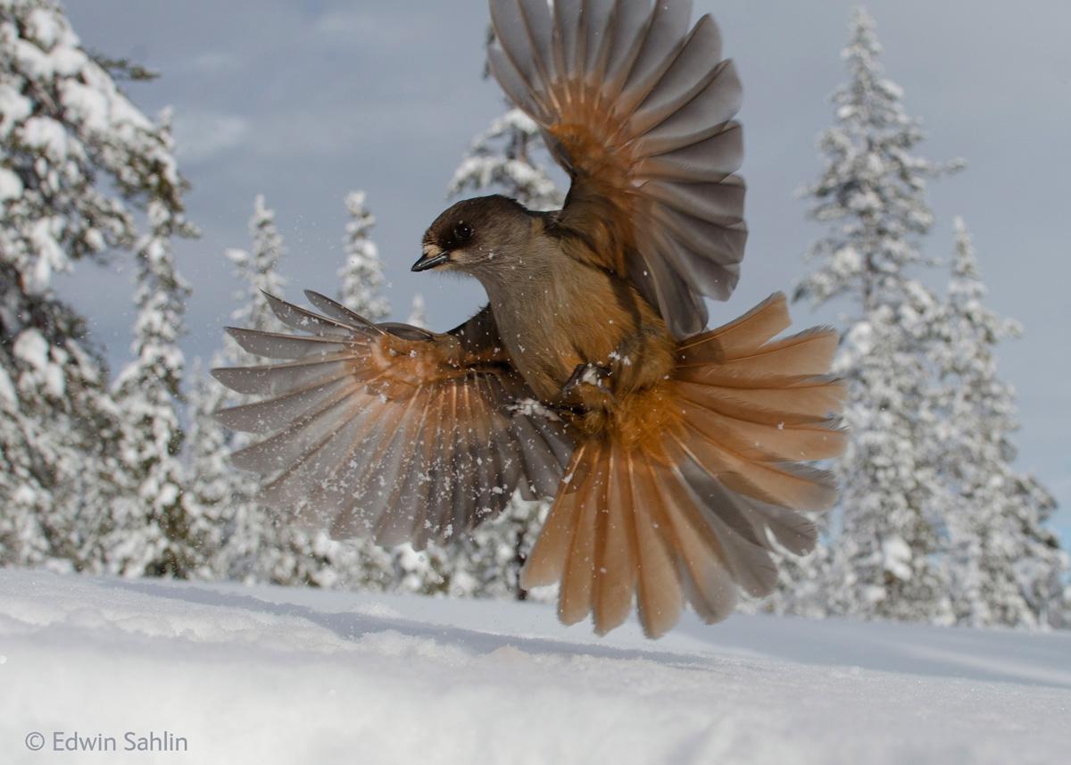 wildlife photographer of the year 2014 winners (3)