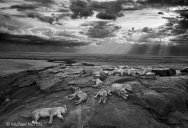 The Winners of the 50th Annual Wildlife Photographer of the Year