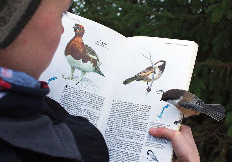 bird lands on page about itself in bird book The Top 100 Pictures of the Day for 2014