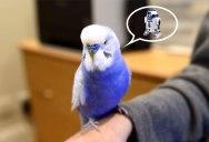 This Bird Talks Like R2D2