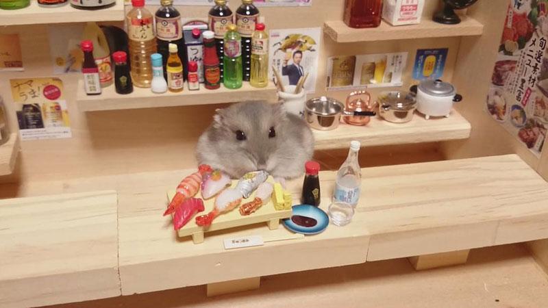 hamster shopkeepers (2)
