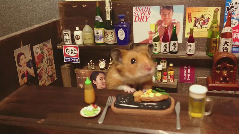 hamster shopkeepers (4)