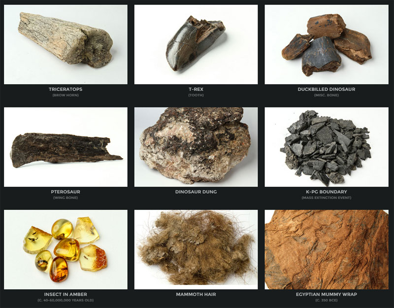 mini museum collection of rare specimens from earth and beyond (5)