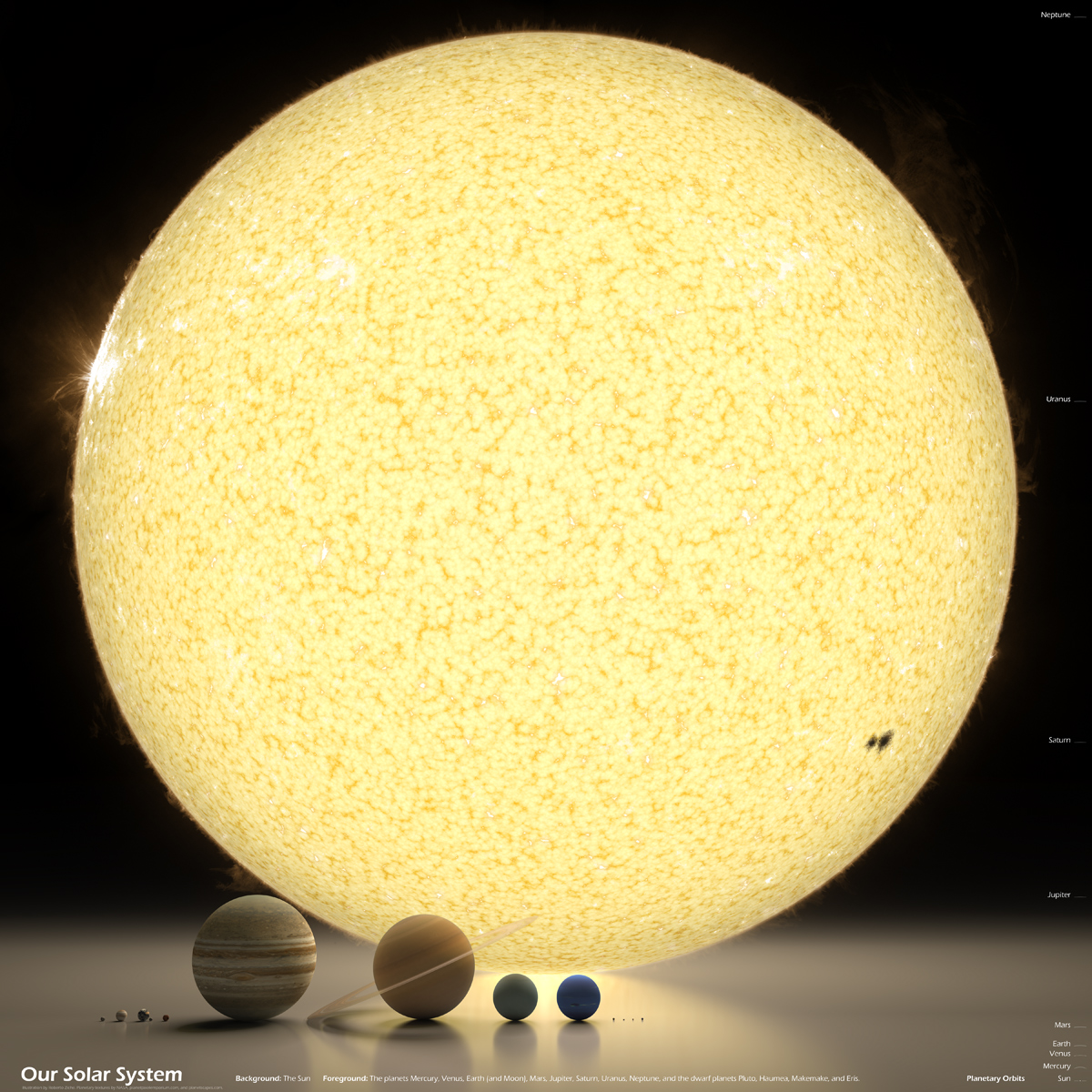 our solar system in perspective The Largest Creatures in the Ocean [Chart]