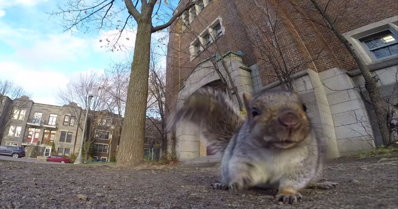 Squirrel Nabs GoPro, Carries It Up a Tree and Drops It