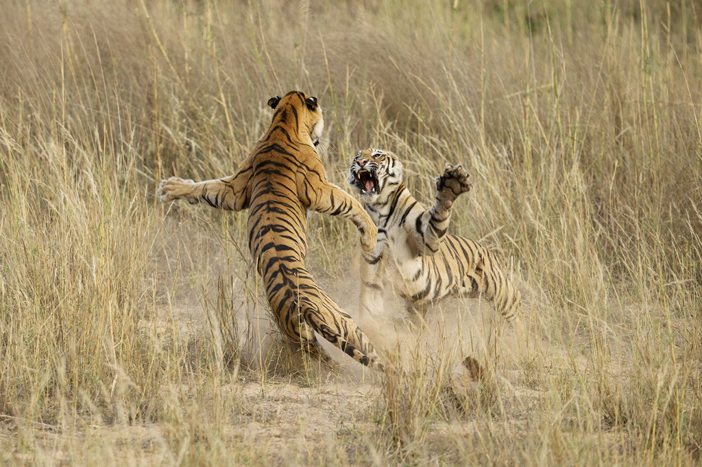 08 2014 10 26 290458 nature The Winners of the 2014 National Geographic Photo Contest