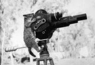 Picture of the Day: This Director is Possum