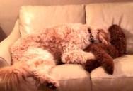 Dog Comforts Friend Having a Bad Dream
