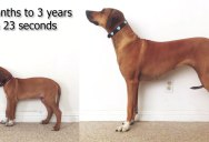 Doglapse: 2 Months to 3 Years in 23 Seconds