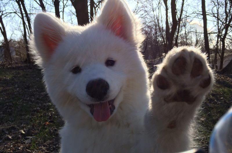 dog waving bye The Shirk Report   Volume 296