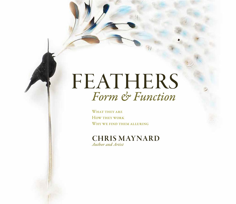 feathers form and function by chris maynard
