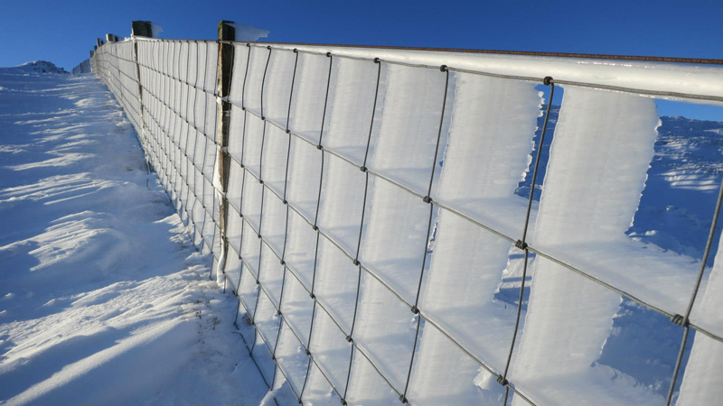hard rime ice on a fence Picture of the Day: Wind Blown