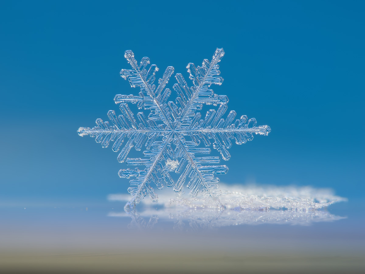 macro of a single snowflake Picture of the Day: Macro Snowflake