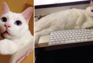 """See Why this Cat Was Named the """"Most Awful Sleeping Face"""" in Japan"""
