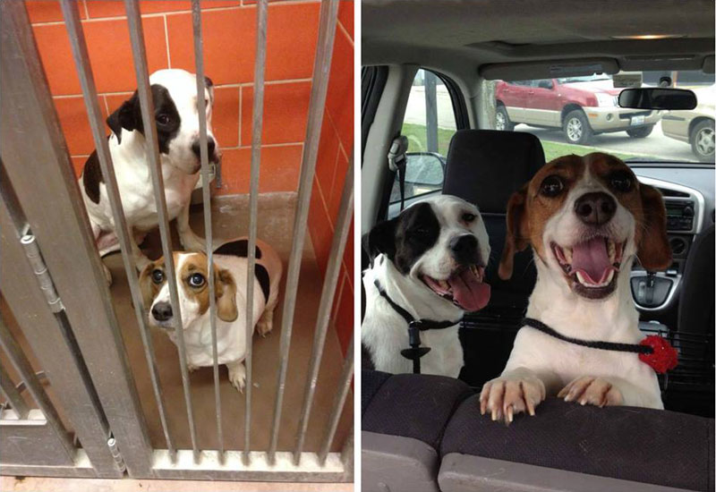 two dogs adoption happiness then and now sad happy This Photographer Does Photo Booths for Dogs to Increase Adoption and Its Working