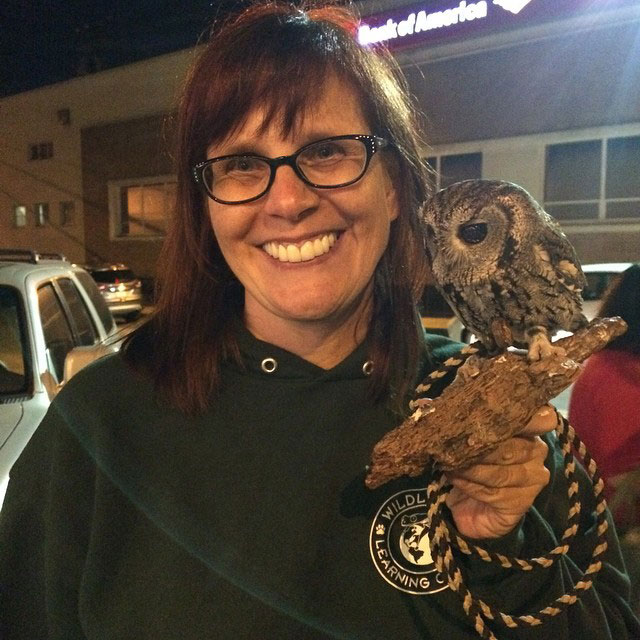 zeus blind owl with starry eyes rescued (4)