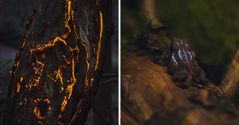 Artists Create a Bioluminescent Forest Using Projectors