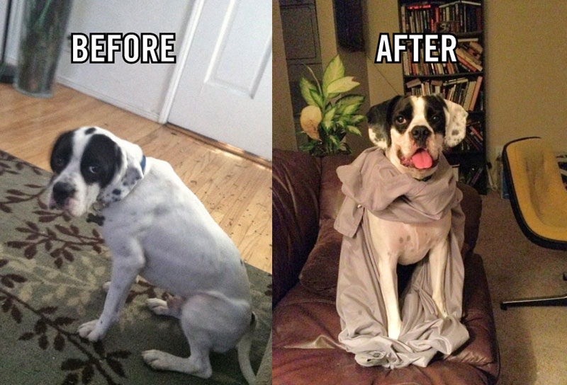 before and after pics of adopted dogs (10)