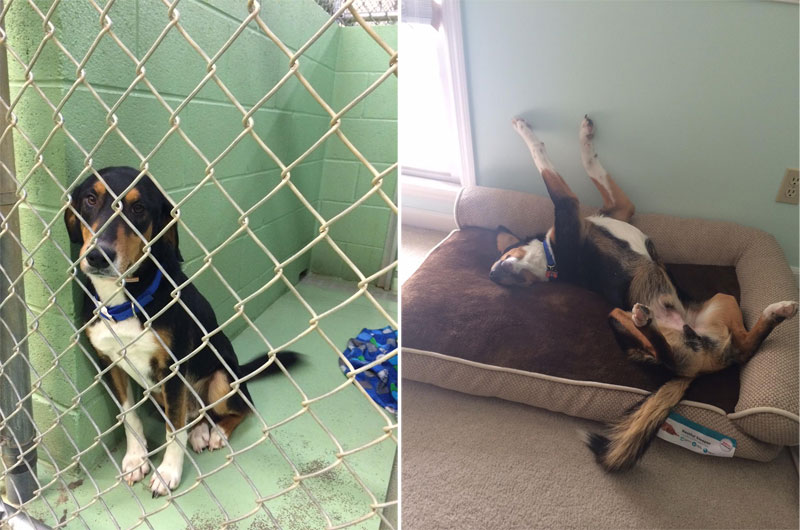 before and after pics of adopted dogs (2)