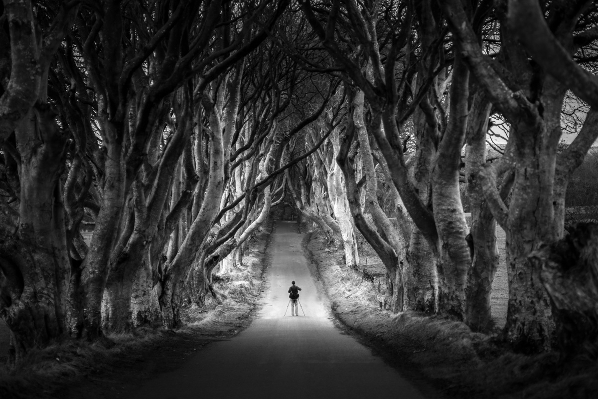 dark hedges of northern ireland bregagh road The Top 100 Pictures of the Day for 2015