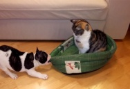 Puppy Wants His Bed Back, Cat Does Not Care