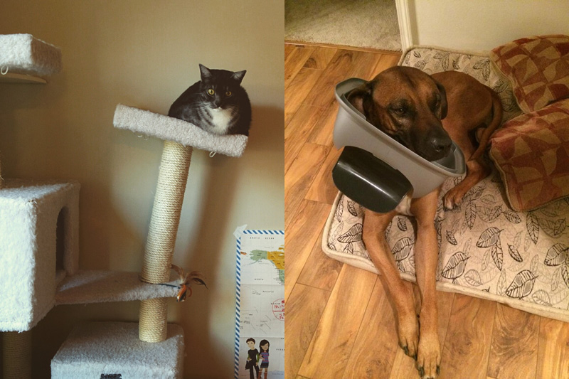 fat cat and bad dog The Shirk Report   Volume 299