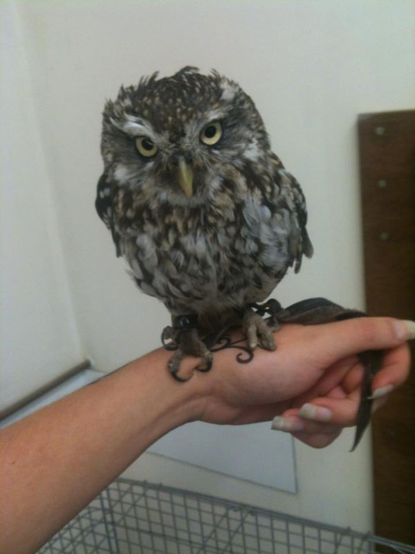 Handler Shares Her Amazing Images With Birds of Prey (8)