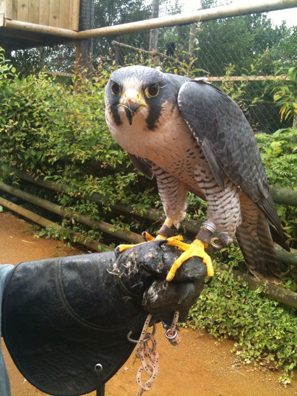 Handler Shares Her Amazing Images With Birds of Prey (9)