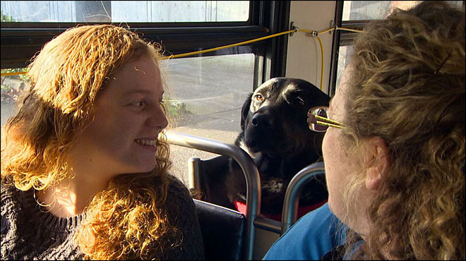 Independent Dog Rides the Bus by Herself to the Park seattle (1)