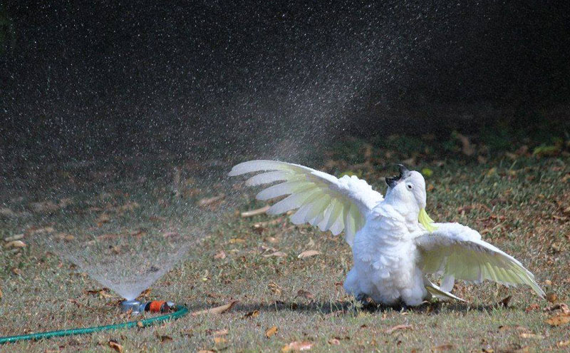spread your wings this weekend The Shirk Report   Volume 300