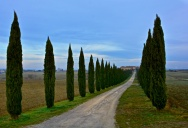 Picture of the Day: Cypresses in Tuscanny