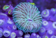 Amazing Underwater Timelapse Shows the Otherworldly Nature of Sea Life