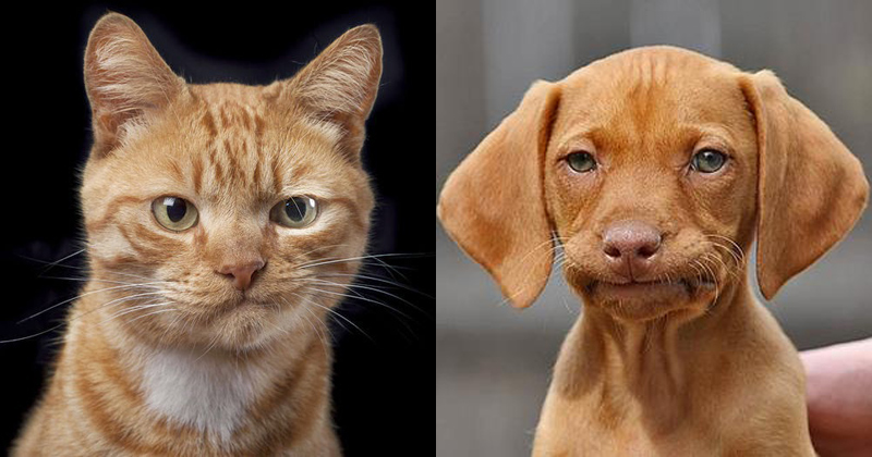 not impressed meh cat and dog The Shirk Report   Volume 306