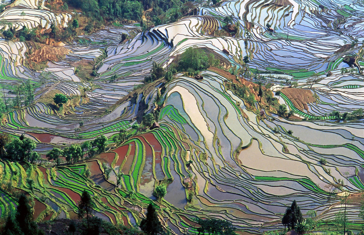 rice terraces in yunnan china aerial from above The Top 100 Pictures of the Day for 2015
