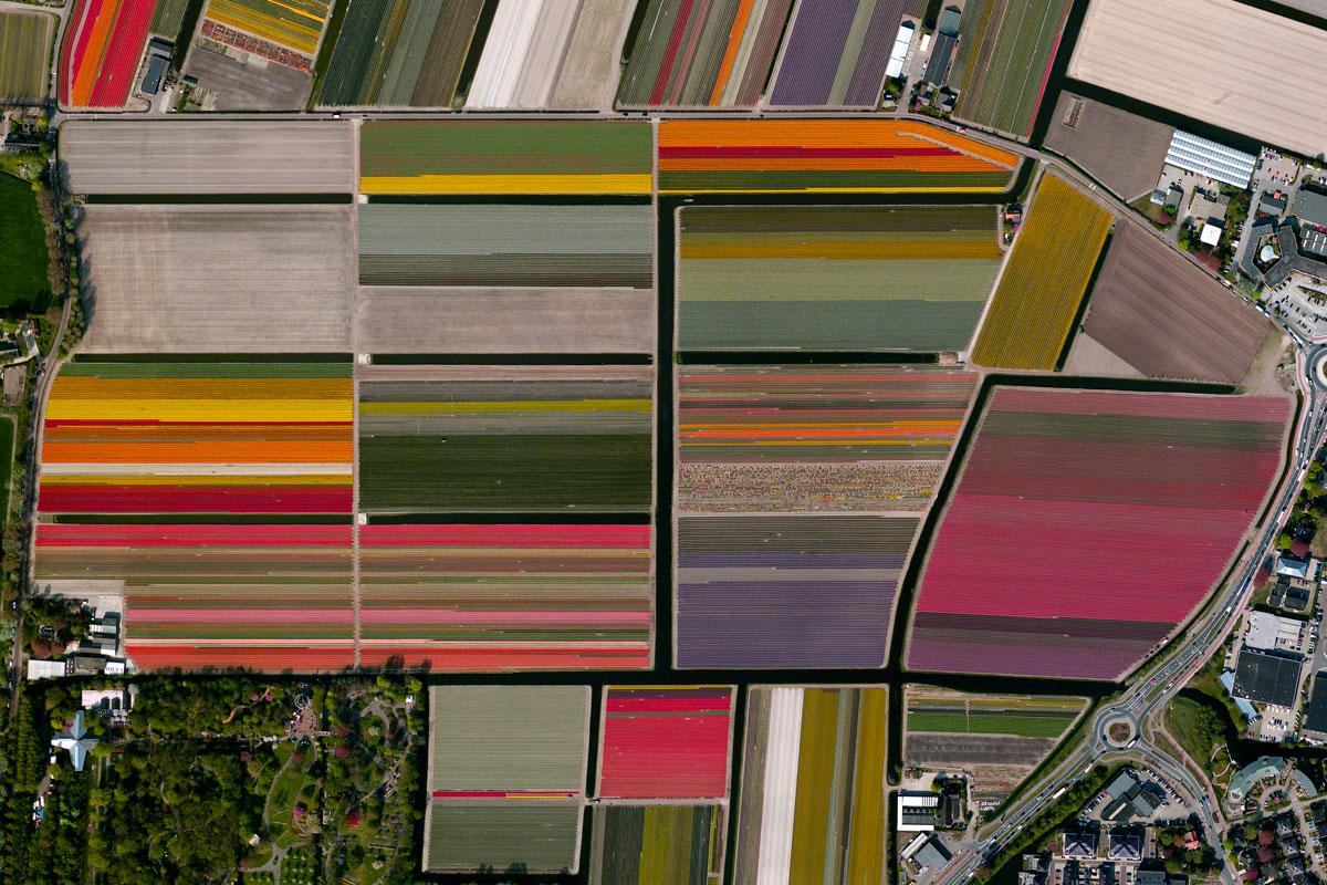 Tulip-Fields,-Lisse,-Netherlands