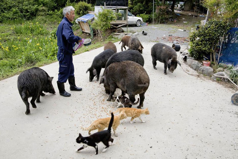 after fukushima Naoto Matsumura takes care of abandoned animals in tomioka (10)