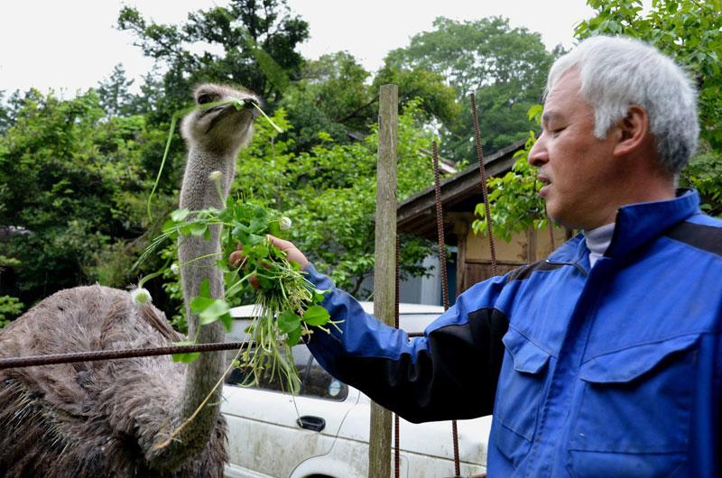 after fukushima Naoto Matsumura takes care of abandoned animals in tomioka (3)