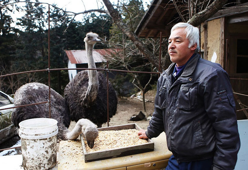 after fukushima naoto matsumura takes care of abandoned animals in tomioka 8 Abandoned Magpie Roams Free but Always Returns to Family that Rescued Her