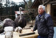 After Fukushima this Town was Abandoned but One Man Returned to Care for the Animals