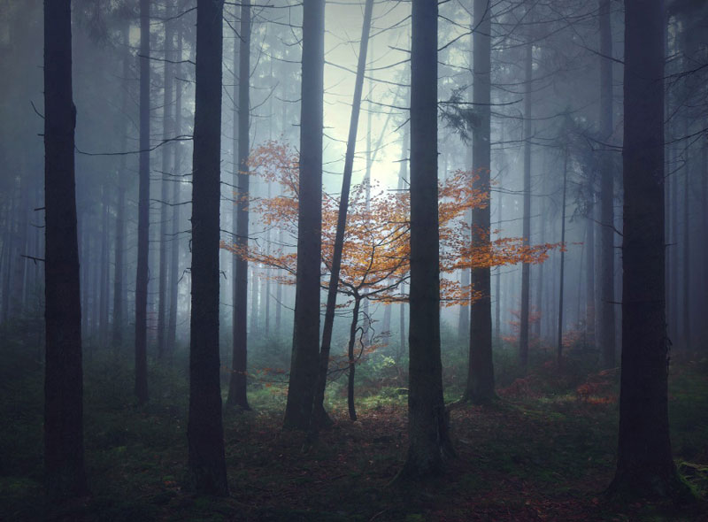 Central European Landscapes Inspired by Grimm's Fairy Tales by Kilian Schongerger (10)