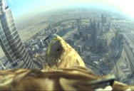 Eagle Takes Flight from the Top of the World's Tallest Building