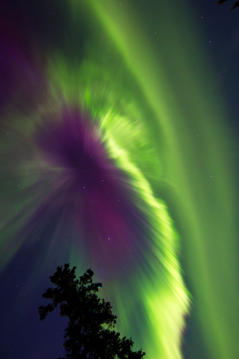 green auroras for st patricks day (1)